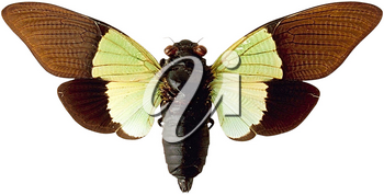 Royalty Free Photo of a Moth
