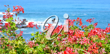 View of the ocean with red flowers in the foreground.