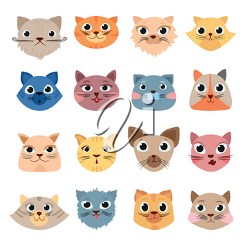 Cats heads. Cute funny domestic animals colored heads happy faces expressive emotions vector set. Cat animal, pet funny set face illustration
