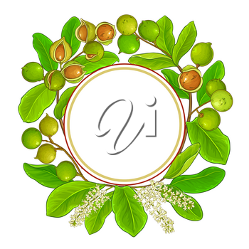 macadamia branches vector frame on white background