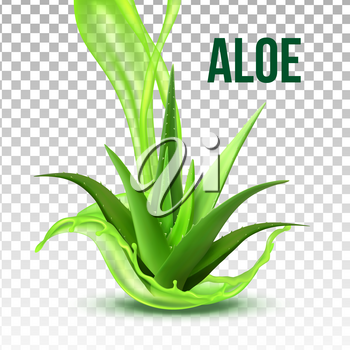 Realistic Foliage Green Plant Aloe Vera Vector. Medicinal Plant With Fresh Splash Juice On Transparency Grid Background. Constituent Of Cosmetology And Pharmacy Lotion Or Cream Realistic Illustration