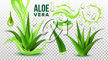 Pharmacy Succulent Aloe Vera Elements Set Vector. Realistic Medicinal Succulent Plant Leaves Cuttings And Juice Drops Elements Collection On Transparent Background. Realistic Illustration