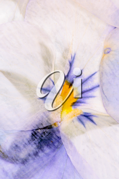 Pressed Flowers Abstract