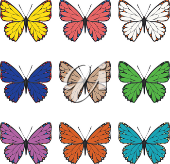 Collection of summer butterflies in different colors on white background.