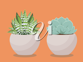 Popular houseplant succulent growing in a pot illustration.