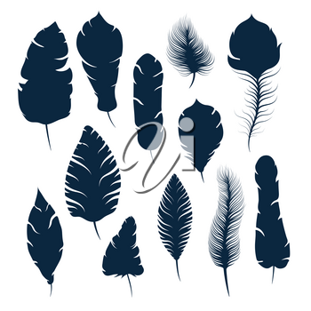 Set of different elegant feather silhouettes isolated on white