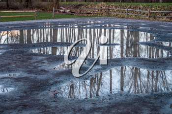 Bare trees are reflected in puddles in Kent, Washington.