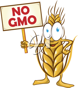 wheat cartoon with signboard no gmo isolated on white  background