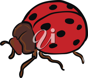 A ladybug with a brown body two antennae six legs and red wings has black polka dots vector color drawing or illustration